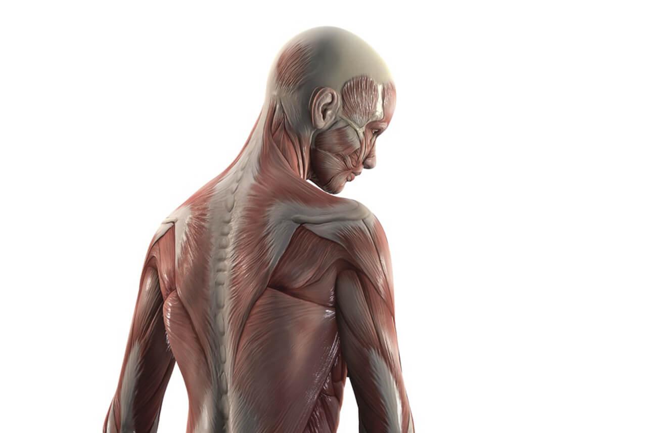 Ungewöhnlich Yoga Anatomie Online Kurs Bilder - Anatomie Ideen ...